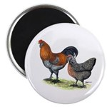 """Ameraucana Poultry 2.25"""" Magnet (10 pack)"""