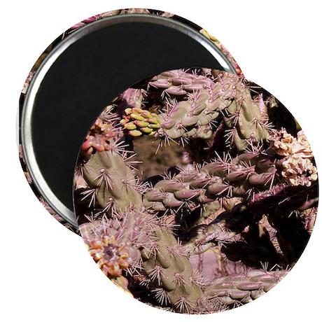 """Cactus 2.25"""" Magnet (10 pack)"""