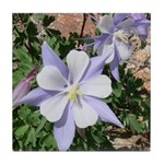 Purple Columbine Tile Coaster