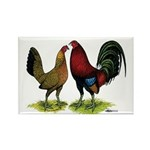 American Gamefowl Pair Rectangle Magnet (100 pack)