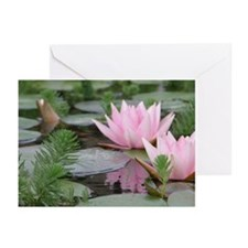 Lily pad Greeting Cards (Pk of 20)