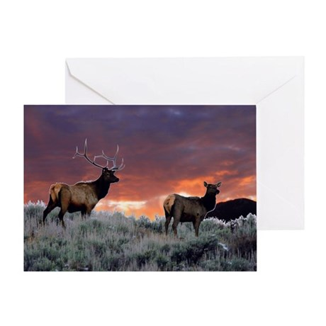 Elk at sunset Greeting Card