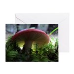 Red Mushroom in Forest Greeting Card