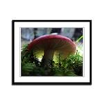 Red Mushroom in Forest Framed Panel Print