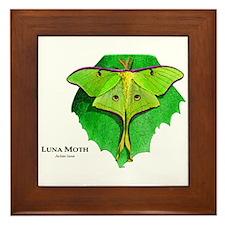 Luna Moth Framed Tile