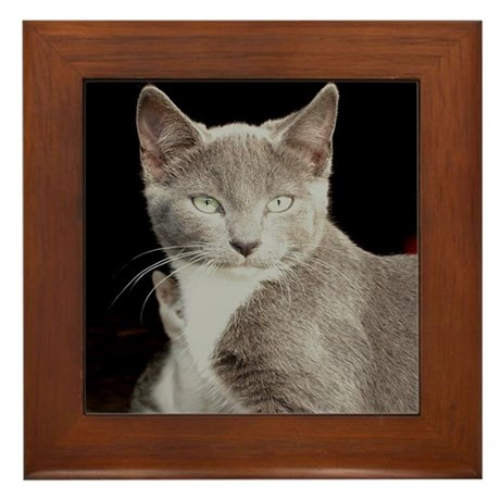 Feral Barn Cats Framed Tile