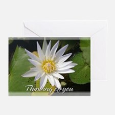 White Lotusflower Thinking of You Cards 5x7 (10Pk)