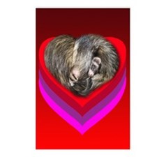 Ferrets Curled in Red Heart Postcards (Package of