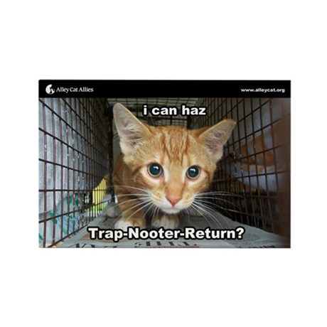 Alley Cat Allies LOLcats Magnet - I can haz TNR?