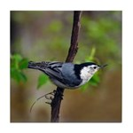 White Breasted Nuthatch Tile Coaster