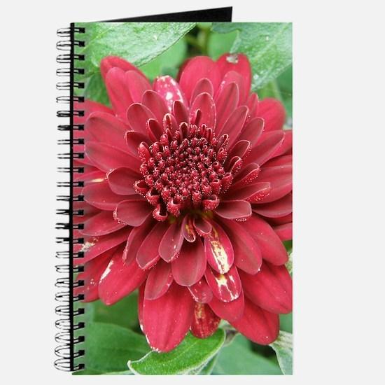 Red Dahlia Journal / Notebook