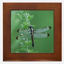Female Spangled Skimmer Framed Tile