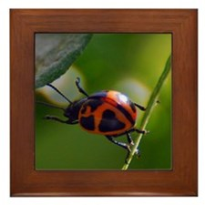 Lady Bug Framed Tile