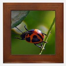 Lady Bug Framed Tile