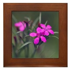 Pink Flower Framed Tile