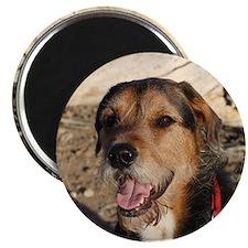 Dog Lover Magnet