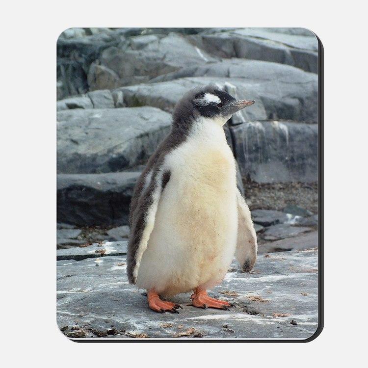 Dreamy Baby Penguin Mousepad