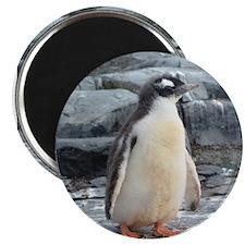 Dreamy Baby Penguin Magnet