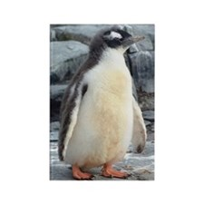 Dreamy Baby Penguin Rectangle Magnet