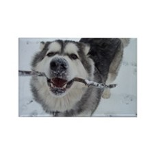 Cute Dogs snow Rectangle Magnet (10 pack)