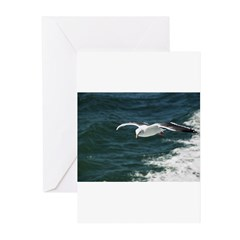 Seagull on San Francisco Bay Greeting Cards (Pk of