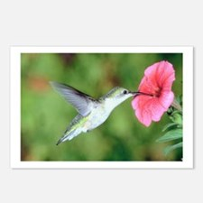Cute Hummingbird Postcards (Package of 8)