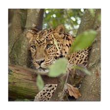 Leopard Cheetaro Tile Coaster