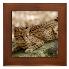 Geoffroy Cat Framed Tile