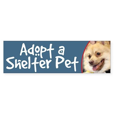 Adopt a Shelter Pet-Spitz Bumper Sticker