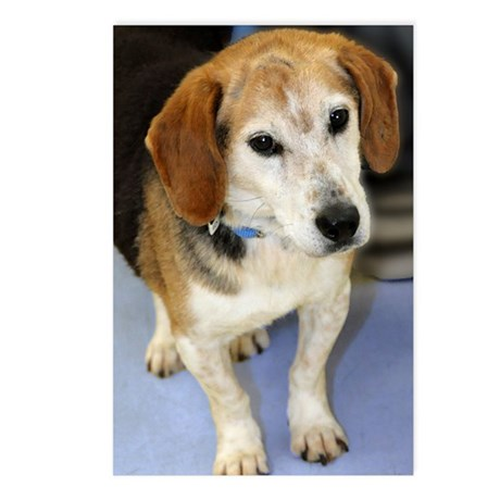 Senior Beagle Photo Postcards (Package of 8)