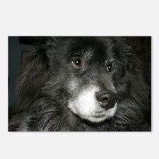 Black Chow Chow Mix Postcards (Package of 8)
