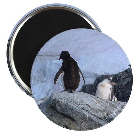 "Be My Valentine Penguin 2.25"" Magnet (10 pack"