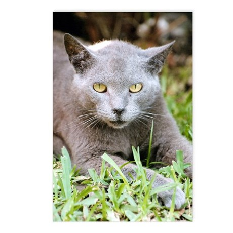 Feisty Russian Blue Postcards (Package of 8)