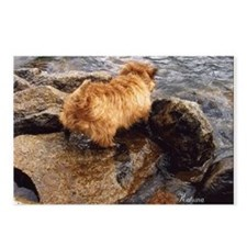 Cairn Terrier Postcards (Package of 8)