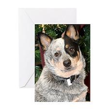 AustralianCattleDog-BlueHeeler Greeting Card
