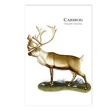 Caribou or Reindeer Postcards (Package of 8)