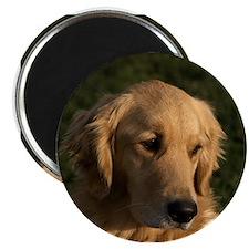 Golden Retriever Head Magnet