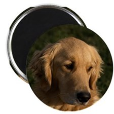 "Golden Retriever Head 2.25"" Magnet (10 pack)"
