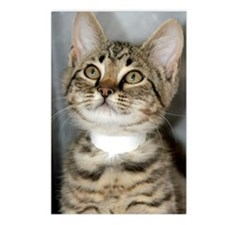 Tabby Kitten Postcards (Package of 8)