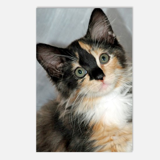 Calico Shelter Kitten Postcards (Package of 8)