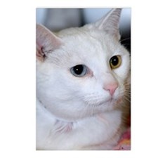 All-White Cat Postcards (Package of 8)
