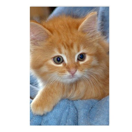 Orange Kitten Postcards (Package of 8)