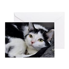 Tuxedo Kitten Greeting Card