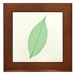 Green Leaf Framed Tile
