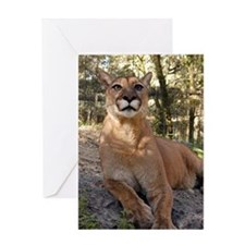 Cougar Greeting Card