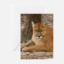 Cougar Greeting Cards (Pk of 20)