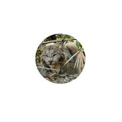 Canadian Lynx Mini Button (10 pack)