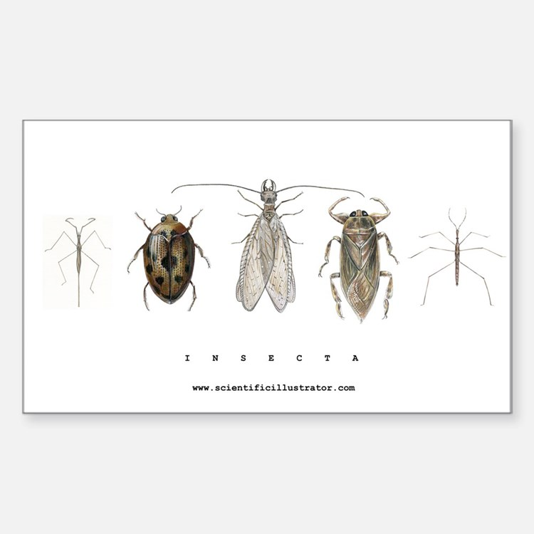 Insecta Decal