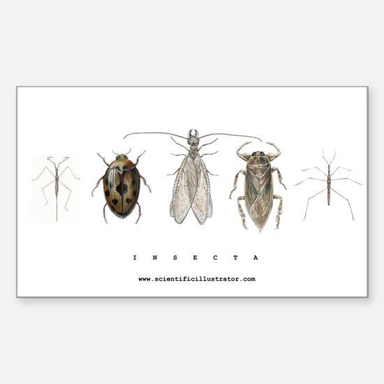Insecta Sticker (Rectangle)