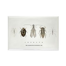 Insecta Rectangle Magnet